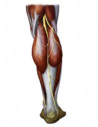 Crea un lato posteriore migliore: rafforza la catena della schiena